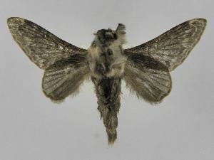(Tolype Montero05 - INB0003783645)  @14 [ ] Copyright (2012) J. Montero Instituto Nacional de Biodiversidad