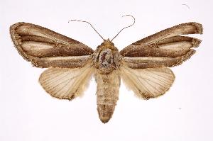 (Draudtargia - INB0003849938)  @14 [ ] Copyright (2012) I. Chacon Instituto Nacional de Biodiversidad
