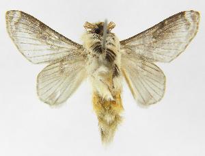 (Tolype caietaJMR03 - INB0003884030)  @13 [ ] Copyright (2012) J. Montero Instituto Nacional de Biodiversidad