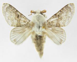 (Tolype caietaJMR02 - INB0003947915)  @14 [ ] Copyright (2012) J. Montero Instituto Nacional de Biodiversidad
