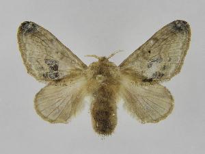 (Tolype perplexaJMR02 - INB0003969813)  @14 [ ] Copyright (2012) J. Montero Instituto Nacional de Biodiversidad