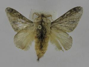 (Tolype Montero03 - INB0004187934)  @13 [ ] Copyright (2012) J. Montero Instituto Nacional de Biodiversidad