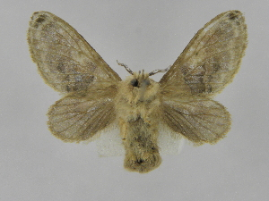 (Tolype Montero08 - INB0004207903)  @14 [ ] Copyright (2012) J. Montero Instituto Nacional de Biodiversidad