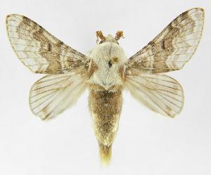 (Tolype caietaJMR01 - INB0004222291)  @15 [ ] Copyright (2012) J. Montero Instituto Nacional de Biodiversidad