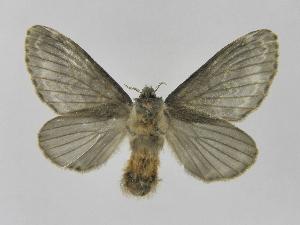(Tolype primitivaJMR01 - INB0004265203)  @14 [ ] Copyright (2012) J. Montero Instituto Nacional de Biodiversidad
