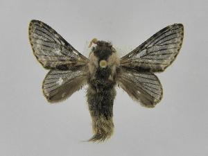 (Tolype primitivaJMR02 - INBIOCRI001836192)  @14 [ ] Copyright (2012) J. Montero Instituto Nacional de Biodiversidad