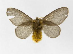 ( - INBIOCRI002035219)  @14 [ ] Copyright (2012) J. Montero Instituto Nacional de Biodiversidad
