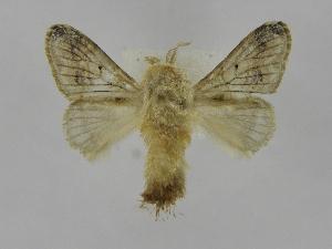 (Tolype Montero02 - INBIOCRI002040721)  @14 [ ] Copyright (2012) J. Montero Instituto Nacional de Biodiversidad