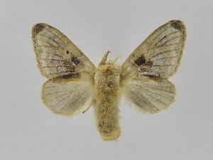 (Tolype Montero10 - INBIOCRI002242533)  @14 [ ] Copyright (2012) J. Montero Instituto Nacional de Biodiversidad