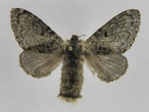 (Tolype Montero04 - INBIOCRI002447771)  @14 [ ] Copyright (2012) J. Montero Instituto Nacional de Biodiversidad