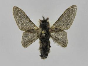 (Tolype Montero09 - INBIOCRI002457422)  @14 [ ] Copyright (2012) J. Montero Instituto Nacional de Biodiversidad