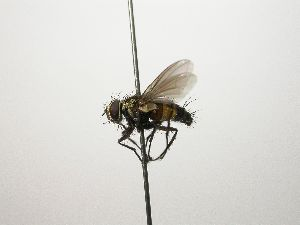 (Lixophaga - INB0003144646)  @15 [ ] Unspecified (default): All Rights Reserved  Unspecified Unspecified
