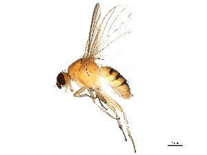 (Megaphthalma - BIOUG01428-E03)  @15 [ ] CC-0 (2012) CBG Photography Group Centre for Biodiversity Genomics