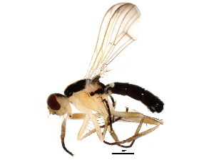 (Americina - BIOUG01475-D07)  @13 [ ] CC-0 (2012) CBG Photography Group Centre for Biodiversity Genomics