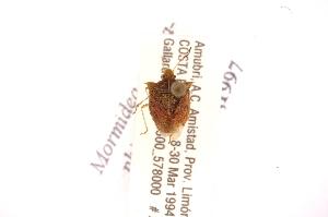 (Lattinidea - INBIOCRI001792020)  @11 [ ] Copyright (2012) Jim Lewis Instituto Nacional de Biodiversidad