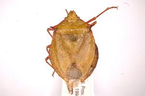 ( - INBIOCRI001820270)  @13 [ ] Copyright (2012) Jim Lewis Instituto Nacional de Biodiversidad