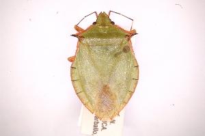 ( - INBIOCRI001824286)  @14 [ ] Copyright (2012) Jim Lewis Instituto Nacional de Biodiversidad