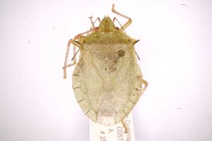 ( - INBIOCRI001959225)  @13 [ ] Copyright (2012) Jim Lewis Instituto Nacional de Biodiversidad