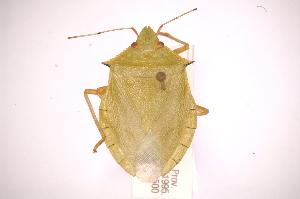 ( - INBIOCRI002179824)  @13 [ ] Copyright (2012) Jim Lewis Instituto Nacional de Biodiversidad