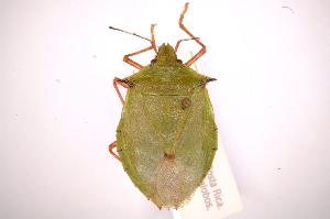 ( - INBIOCRI002399306)  @14 [ ] Copyright (2012) Jim Lewis Instituto Nacional de Biodiversidad