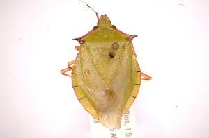 ( - INBIOCRI002400221)  @13 [ ] Copyright (2012) Jim Lewis Instituto Nacional de Biodiversidad