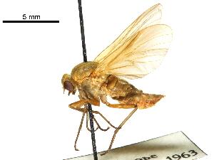(Arthrocerinae - CCDB-31123-F01)  @11 [ ] CreativeCommons - Attribution Non-Commercial Share-Alike (2017) CBG Photography Group Centre for Biodiversity Genomics