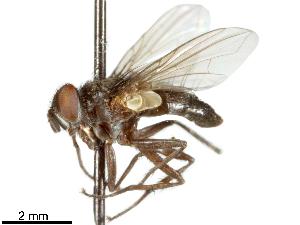 (Tettigoniophaga - CCDB-31126-D09)  @11 [ ] CreativeCommons - Attribution Non-Commercial Share-Alike (2017) CBG Photography Group Centre for Biodiversity Genomics