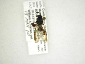 (Cacoceria - INB0004290161)  @13 [ ] Copyright (2012) M. Zumbado Instituto Nacional de Biodiversidad