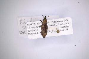 ( - INB0003315979)  @12 [ ] Copyright (2012) Angel Solis Instituto Nacional de Biodiversidad