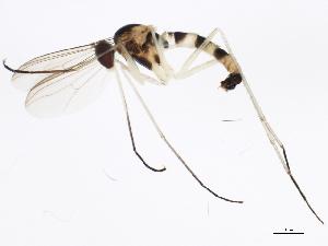 (Neurigoninae - 10BBCDDIP-3285)  @14 [ ] CC-0 (2011) CBG Photography Group Centre for Biodiversity Genomics