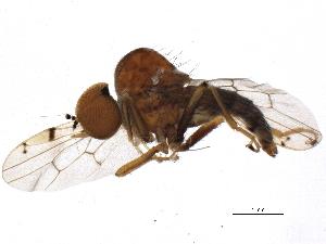 (Hybotidae - BIOUG01241-G11)  @15 [ ] CreativeCommons - Attribution Non-Commercial Share-Alike (2012) CBG Photography Group Centre for Biodiversity Genomics
