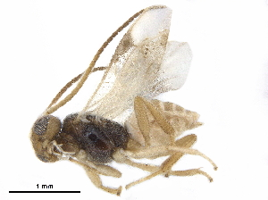 (Dirrhopinae - BIOUG44561-B11)  @11 [ ] CreativeCommons - Attribution Non-Commercial Share-Alike (2019) CBG Photography Group Centre for Biodiversity Genomics