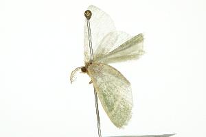 ( - 10BBCLP-0361)  @12 [ ] CC-0 (2010) CBG Photography Group Centre for Biodiversity Genomics