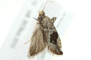 ( - 10BBCLP-2917)  @12 [ ] CC-0 (2011) CBG Photography Group Centre for Biodiversity Genomics