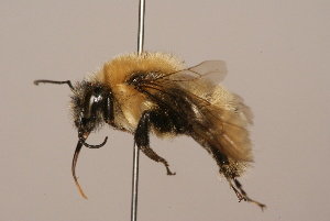 (Hymenoptera - B3262-D02-CHN)  @17 [ ] Unspecified (default): All Rights Reserved  Unspecified Unspecified