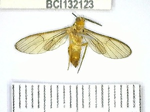 (Myrmecopsis sp. 1YB - YB-BCI132123)  @11 [ ] No Rights Reserved  Unspecified Unspecified