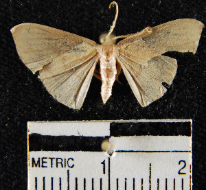(Geometridae_incertae_sedis sp. 58YB - YB-BCI13926)  @13 [ ] No Rights Reserved  Unspecified Unspecified