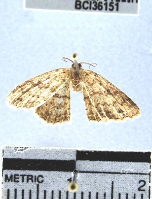 (Geometridae_incertae_sedis sp. 106YB - YB-BCI36151)  @11 [ ] No Rights Reserved  Unspecified Unspecified