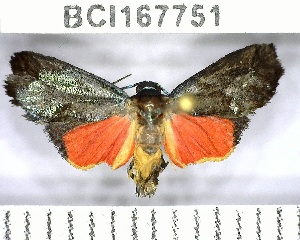 (Talara sp. 6YB - YB-BCI167751)  @11 [ ] No Rights Reserved  Unspecified Unspecified