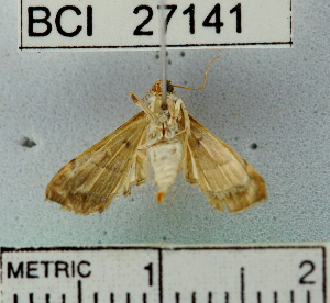 (Salbia sp. 1YB - YB-BCI27141)  @12 [ ] No Rights Reserved  Unspecified Unspecified