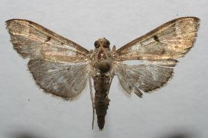 (spiloBioLep01 BioLep404 - 06-SRNP-106796)  @14 [ ] CreativeCommons - Attribution Non-Commercial Share-Alike (2007) Daniel H. Janzen Guanacaste Dry Forest Conservation Fund