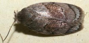 (elachBioLep01 BioLep694 - 10-SRNP-100907)  @13 [ ] CreativeCommons - Attribution Non-Commercial Share-Alike (2013) Daniel H. Janzen Guanacaste Dry Forest Conservation Fund