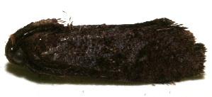 (tinBioLep01 BioLep1472 - 10-SRNP-105115)  @12 [ ] CreativeCommons - Attribution Non-Commercial Share-Alike (2010) Daniel H. Janzen Guanacaste Dry Forest Conservation Fund