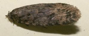 (tinBioLep01 BioLep8663 - 10-SRNP-114992)  @12 [ ] CreativeCommons - Attribution Non-Commercial Share-Alike (2010) Daniel H. Janzen Guanacaste Dry Forest Conservation Fund