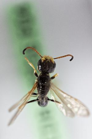 Bộ sưu tập côn trùng 2 F04%2B1460730542