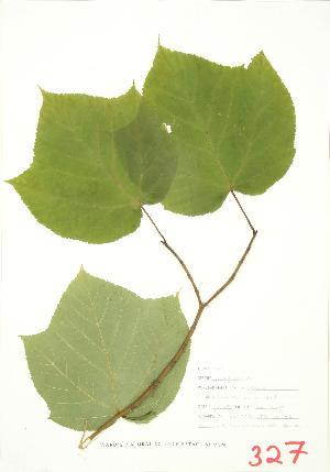 (Sapindales - JEM 071)  @14 [ ] Copyright (2009) Steven Newmaster University of Guelph BIO Herbarium