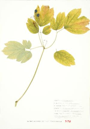( - JEM 160)  @11 [ ] Copyright (2009) Steven Newmaster University of Guelph BIO Herbarium