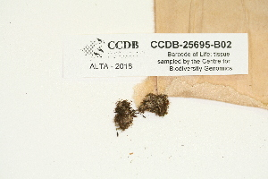 (Tetraphidaceae - CCDB-25695-B02)  @11 [ ] CreativeCommons - Attribution Non-Commercial Share-Alike (2018) Masha L. Kuzmina Canadian Centre for DNA Barcoding