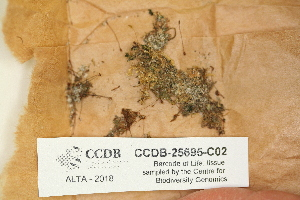 (Tetraphidopsida - CCDB-25695-C02)  @11 [ ] CreativeCommons - Attribution Non-Commercial Share-Alike (2018) Masha L. Kuzmina Canadian Centre for DNA Barcoding