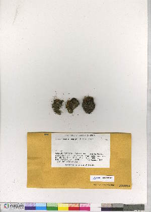 (Encalyptales - CCDB-28011-D07)  @11 [ ] CreativeCommons - Attribution Non-Commercial No Derivatives (2016) Canadian Museum of Nature Canadian Museum of Nature